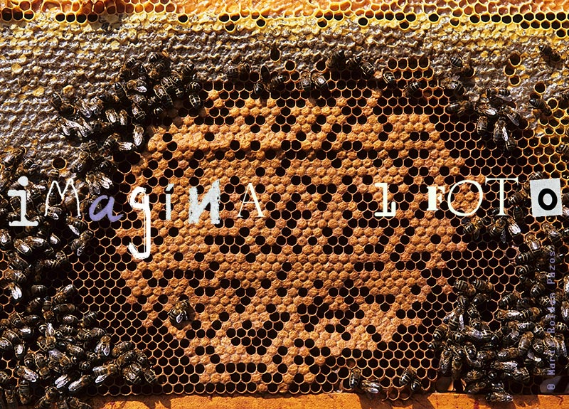 honeycomb, bees, photo