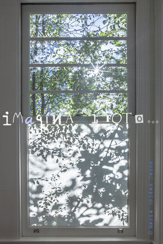 window with tree and shadows